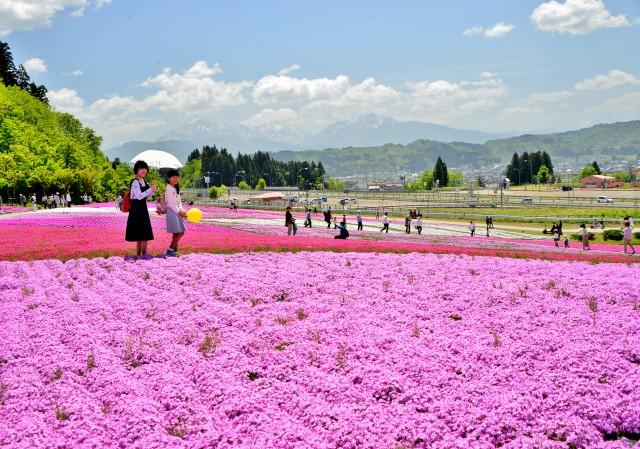 魚沼芝桜公園 芝桜祭り