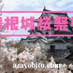 彦根城 桜 満開 トイレ