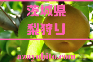 茨城県梨狩り