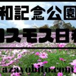 昭和記念公園のコスモス日程