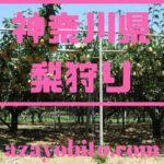 神奈川県梨狩り