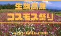 生駒高原コスモス祭り2019日程|開花状況、花火やライトアップ情報も