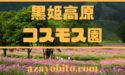 黒姫高原コスモス園開花状況や見ごろ|割引クーポン券やライブカメラについても