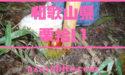 和歌山県の栗拾いおすすめランキング!